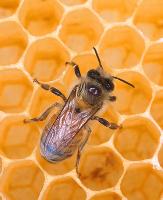 Пчелиные небоскребы