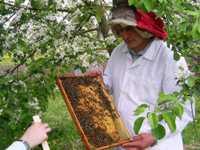Ассоциация «Пчеловодство России»